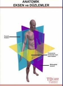 Skolyoz Şekil 1. Vücudun düzlemleri